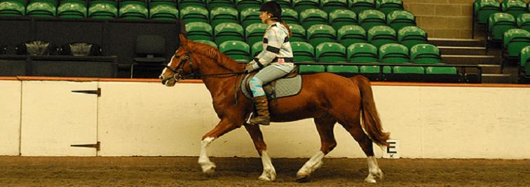 Docklands Equestrian Centre