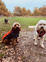 Dogs & the City East London